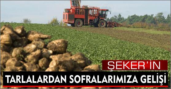 ŞEKER SOFRALARA NASIL GELİYOR